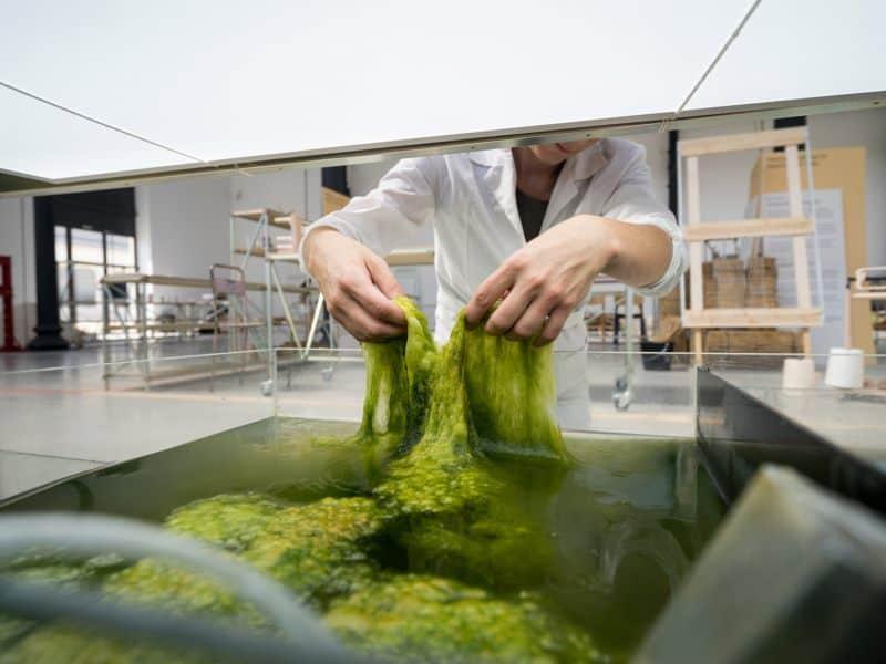 Морские водоросли для изготовления биопластика